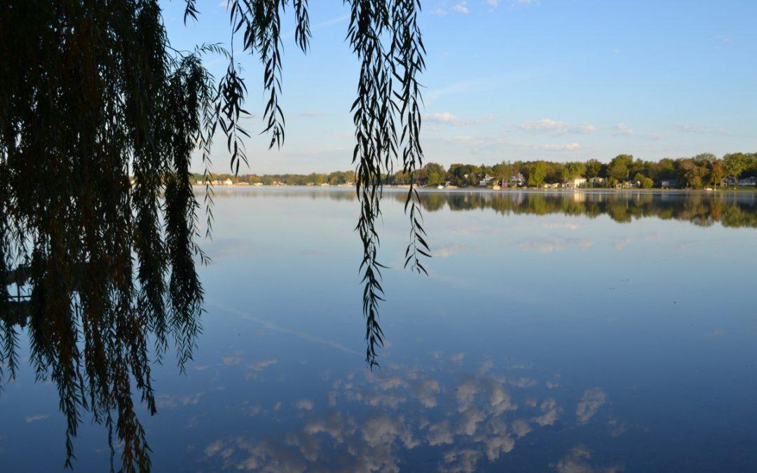 Cormorants–a New Threat to Clark Lake?