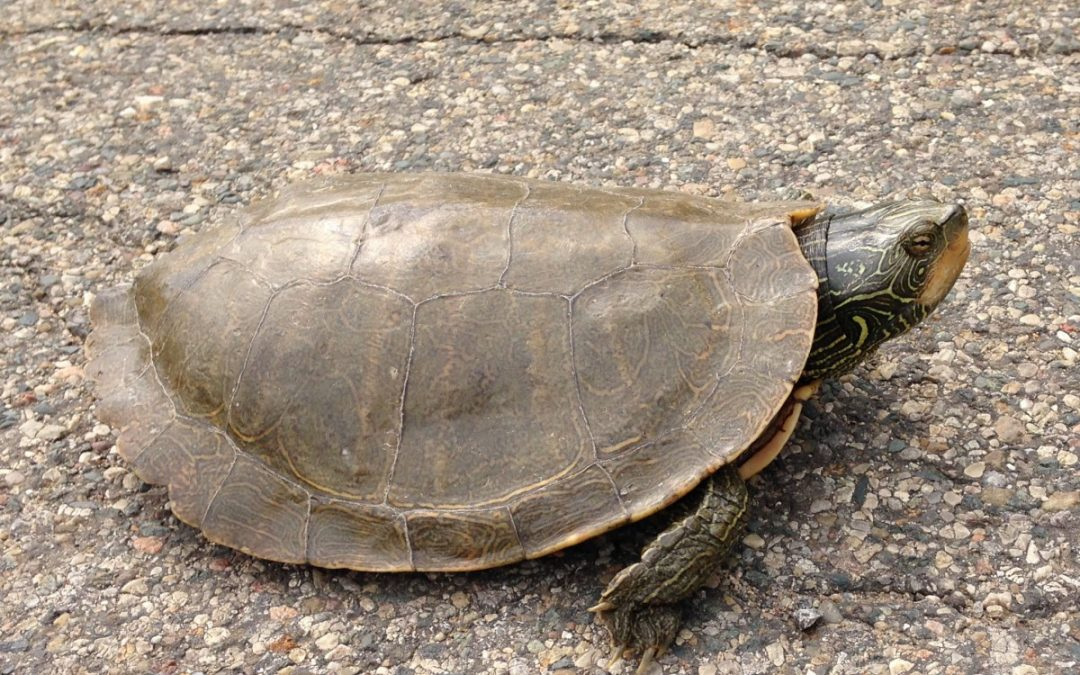 Turtle Talk, Continued