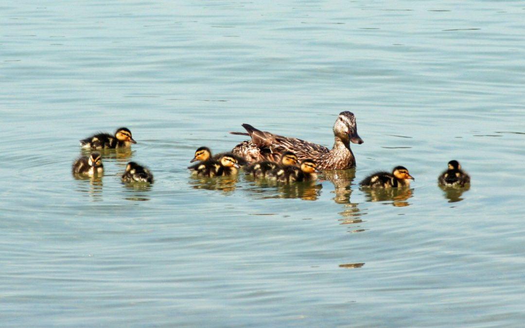 Nine New Clark Lake Residents