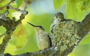 Clark Lake's Hummingbirds 2016