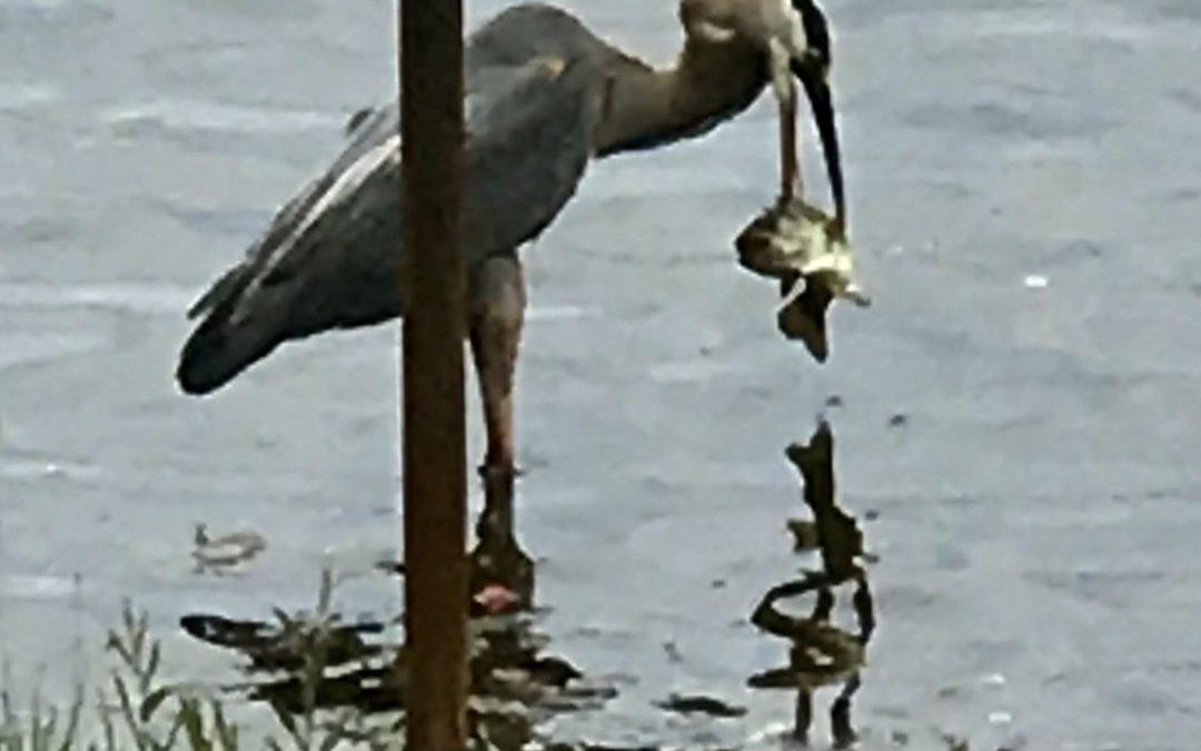 Fowl Fishing