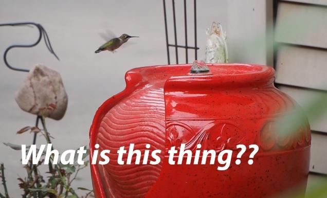 Hummingbird Bath Time