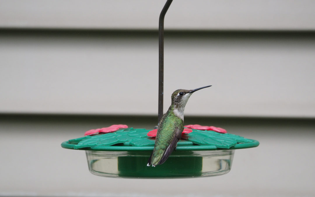 The Furnace and the Hummingbird