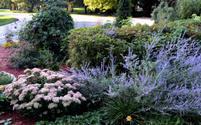 Bigger Blooms for Thirsty Plants