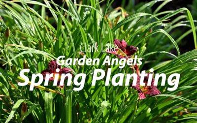 Garden Angels Spring Planting – 2021